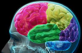 Brain Teaser (FL)